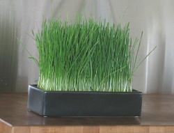 Bonsai Grass Garden in matte charcoal