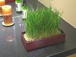 The Bonsai Grass Garden in the batch
