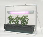 Floating Garden Plant Light Assembly with basil  growing  in our Floating Garden Vegetable Hydroponic Garden Kit