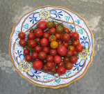 variety of hydroponic cherry tomatoes