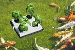 Floating Garden Vegetable Garden Kit